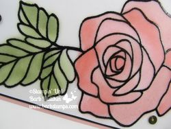 Rose_wonder_vellum_angle